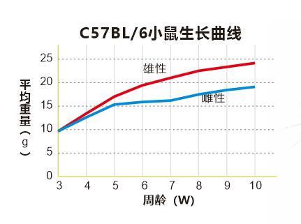 C57BL6quxian.jpg